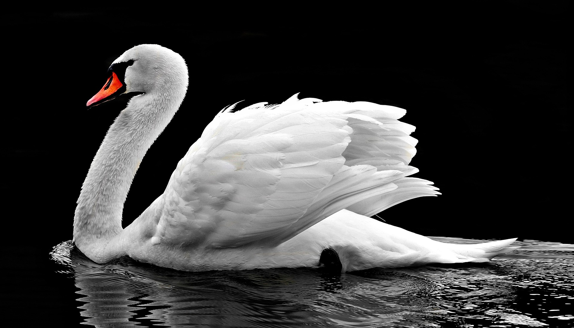Swans will be fine fed bread if there is no other food available for them, the Queen's swan marker David Barber has said.